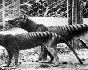 Half dog- half tiger is a strange creature