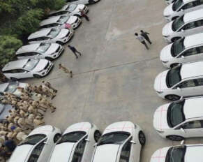 New Kia cars for additional collectors in Telangana ..
