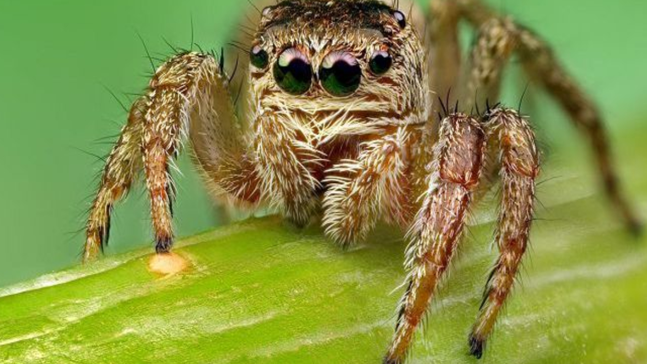 Spider smuggling in Chennai .. Customs officers caught 107 spiders ..